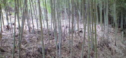 Bamboo was part of Japanese lives.