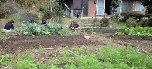 Japanese Vegetable field in Oita
