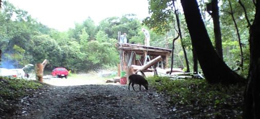Share Nature with Boar in Oita