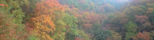 Autumn Color in Oita
