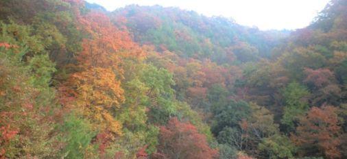 Autumn Color in Oita