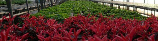 Powerful Totoki Garden in Bunngoohno