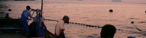 Japanese Fisherman's sense