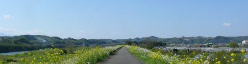 Rape Blossoms Road