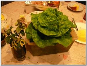 manoa-lettuce